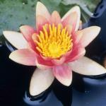Spring 2013: Mindfulness and Compassion: Living Fully Personally and Professionally - NUIP 3030 & RELB 3559