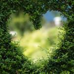 Heartfulness Meditation (Student-led program)