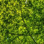 Spring 2019: Foundations of Mindfulness Practice — NUIP 2210